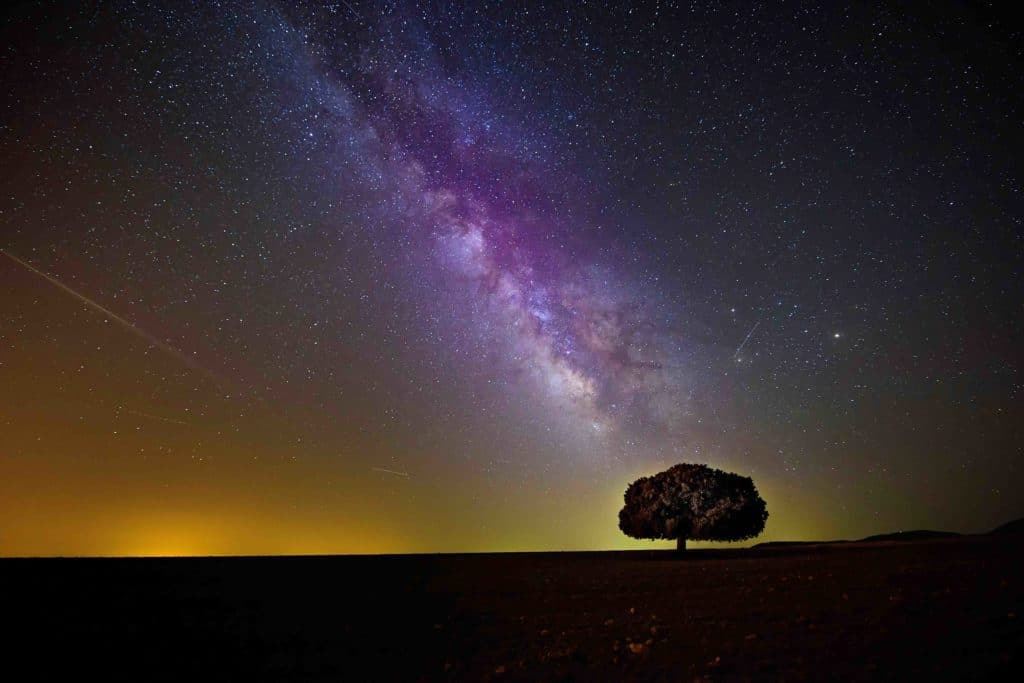 tree milkyway photo